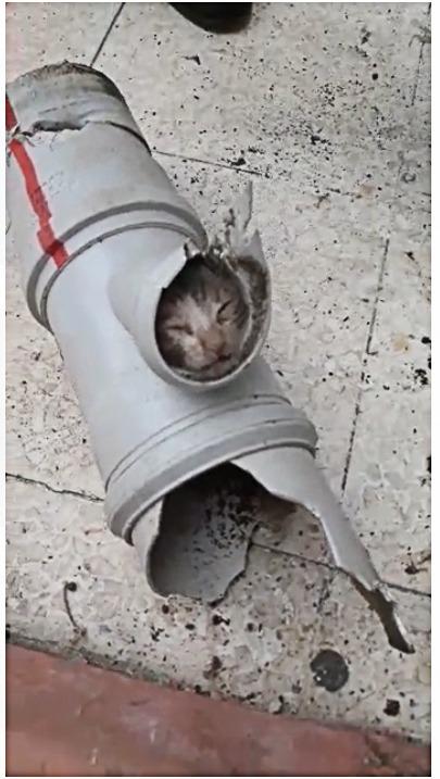 Boruya Sıkışan Kedi Yavrusunu İtfaiye Ekipleri Kurtardı