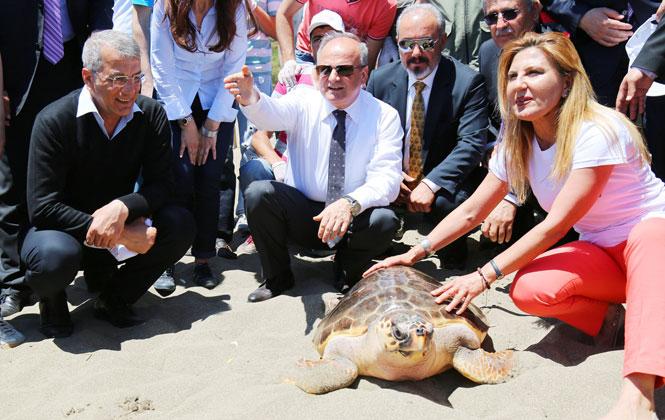 100. Yıl Plajında Doğa Cinayeti İşleniyor, Üreme Alanında Festival Düzenlenip ve Konser Verilecek