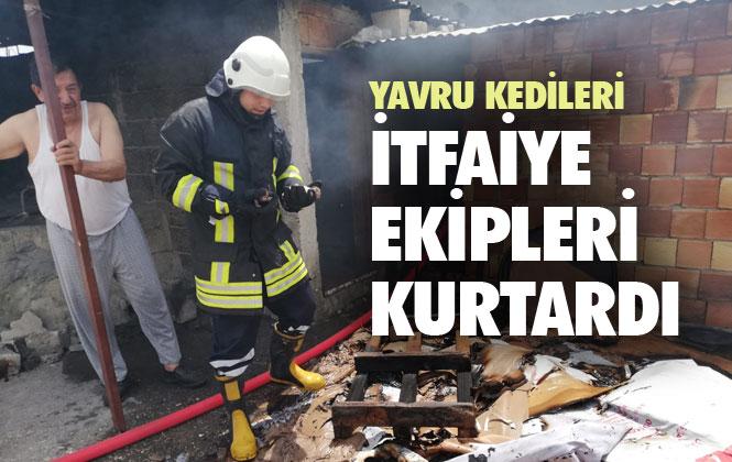 Mersin Tarsus Barbaros Mahallesindeki Bir Evin Odunluğunda Çıkan Yangında, Yavru Kedileri İtfaiye Kurtardı