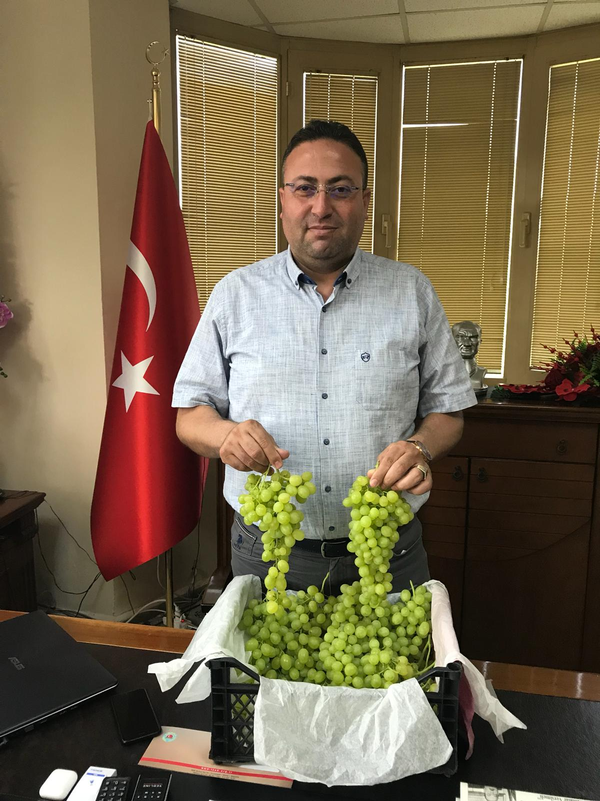Tarsus Ziraat Odası Başkanı Veyis Avcı Üzümlerin Erken Hasat Edilmemesi İçin Uyarı da Bulundu, ''Olgunlaşmadan Hasat Yapmayın''