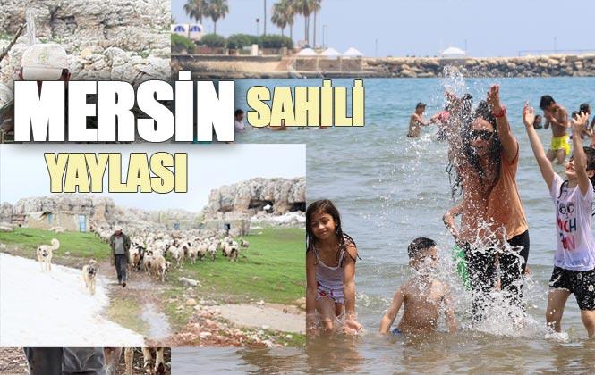 Mersin'in Yaylasında Kar Mücadelesi, Sahilde İse Deniz Keyfi