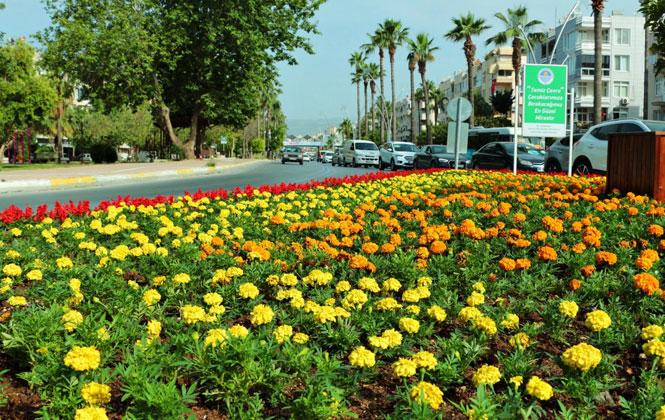 Mersin, Rengarenk Çiçeklerle Bezeniyor!Park ve Bahçeler'de Yoğun Tempo