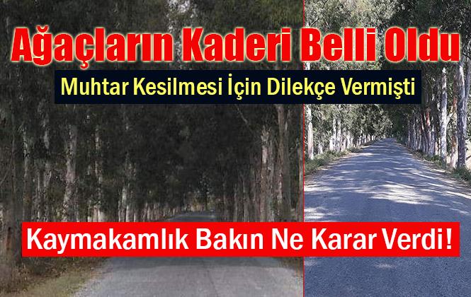 Mersin Tarsus'taki Ağaçların Kesilmesiyle İlgili Karar Belli Oldu