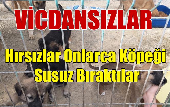 Mersin Tarsus Hayvan Barınağının Kabloları Çalındı