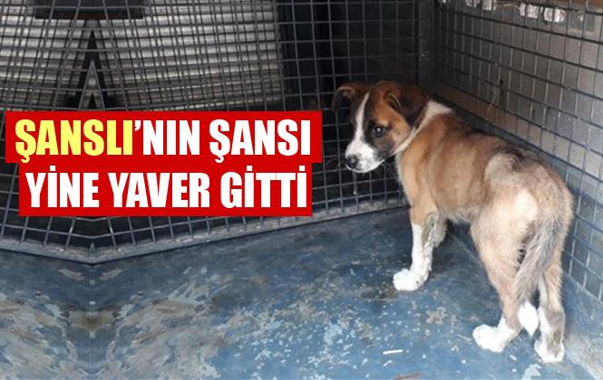 Mersin'de Kanala Düşen Yavru Köpeği İtfaiye Ekipleri Kurtardı