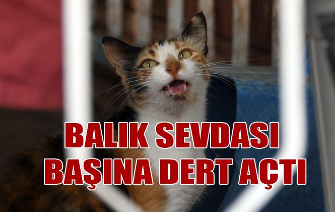 Mersin'de Kedinin Ağzına Balık İğnesi Battı