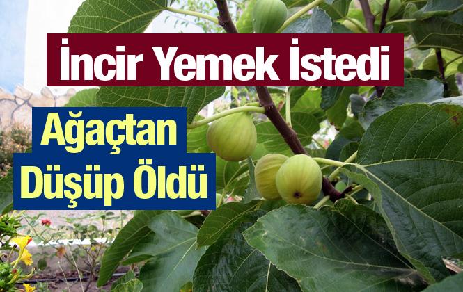 Mersin Tarsus'ta İncir Ağacından Düşen Hilmi Canatan Hayatını Kaybetti