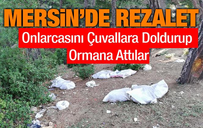 Mersin'de Ölü Tavukları Çuvallara Doldurup Piknik Alanına Attılar