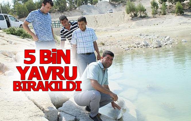 Mersin Gülnar'da 5 Bin Yavru Sazan Yassıbağ Göletine Bırakıldı