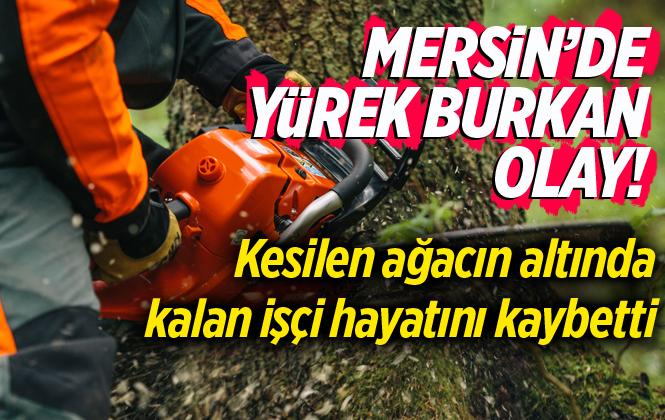 Mersin Mut'ta Kesilen Ağacın Altında Kalan Hüseyin Barış Hayatını Kaybetti