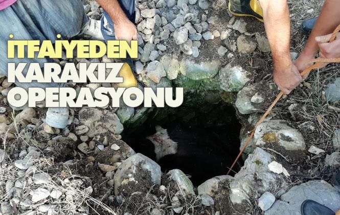 Karakız'ın İmdadına Büyükşehir Yetişti! İtfaiyeden Karakız Operasyonu