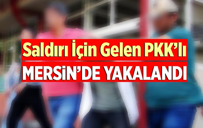 Terör Örgütü PKK'nın Dağ Kadrosundaki Terörist Mersin'de Yakalandı