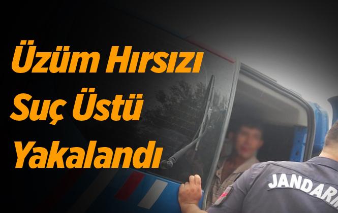 Mersin Tarsus'ta Üzüm Çalan Şahıs Yakayı Ele Verdi.