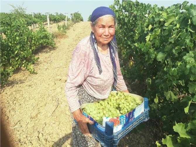 Mersin'de Üzüm Üreticileri İsyanda