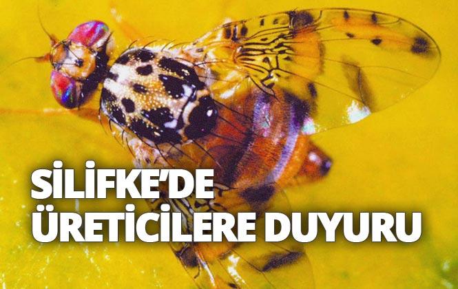 Silifke İlçe Tarım ve Orman Müdürlüğünden Akdeniz Meyve Sineği İle Toplu Mücadele Duyurusu
