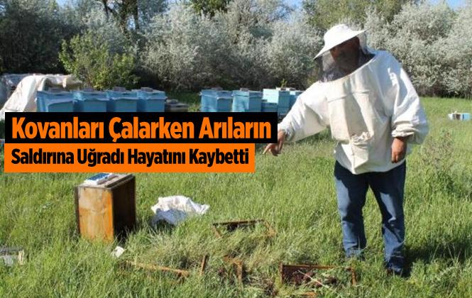 Adana Kovanları Çalarken Arıların Soktuğu Genç Öldü