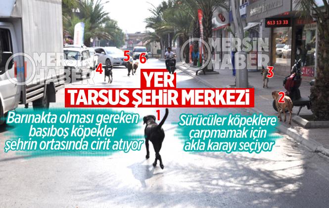 Tarsus'ta Başıboş Köpekler Tehlike Saçıyor
