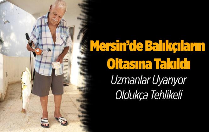 Mersin'de Balıkçıların Oltasına Balon Balığı Takıldı