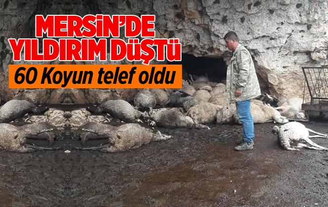 Mersin Anamur'da Yıldırım Düştü 60 Koyun Telef Oldu