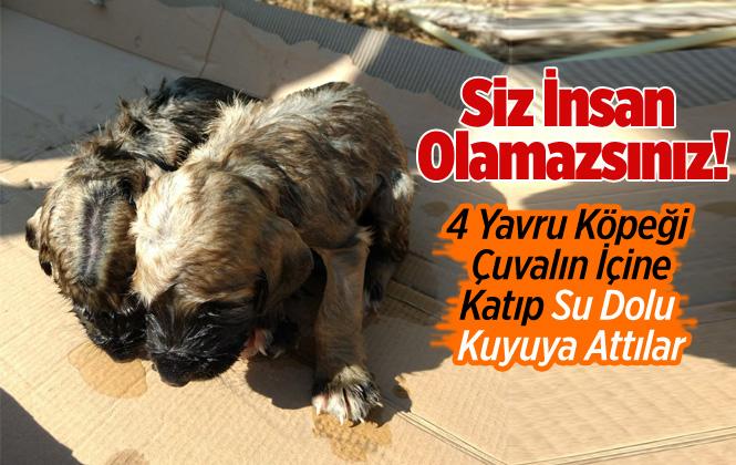 Mersin'de 4 Yavru Köpeği Çuvala Koyup, Kuyuya Attılar