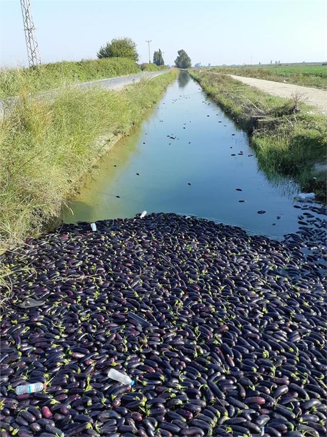 Çiftçiler Para Etmeyen Patlıcanı Kanala Döktüler