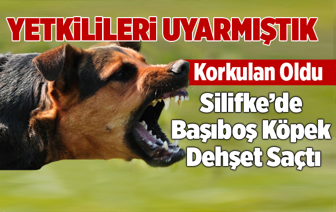 Silifke'de Başıboş Köpek Posta Dağıtıcısına Saldırarak Hastanelik Etti