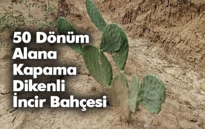 Mersin Tarsus'ta 50 Dönüm Alana Kapama Dikenli İncir Bahçesi