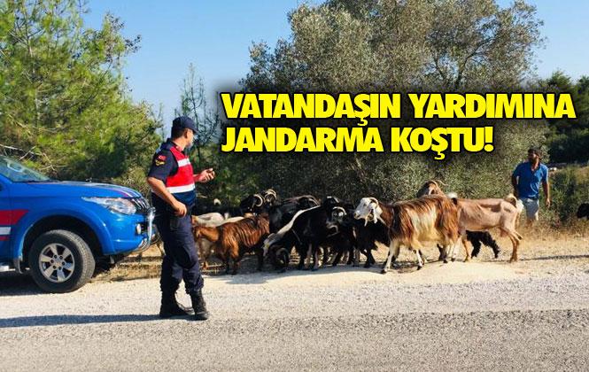 Mersin Mezitli Pelitkoyağı Mahallesi Kırsalında Koyunları Kaybolan Vatandaşın, Yardımına Jandarma Koştu