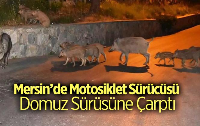 Mersin'de Motosiklet Domuz Sürüsüne Çarptı