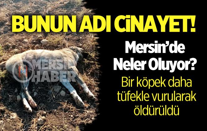 Mersin'de Bir Köpek Daha Silahla Vurularak Öldürüldü