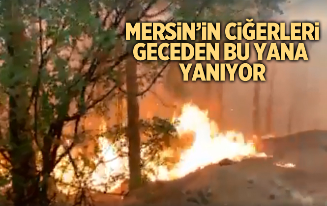 Mersin'de 13 farklı noktada orman yangını