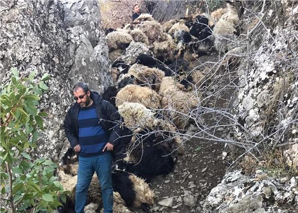 315 Koyun Uçurumdan Düşerek Telef Oldu