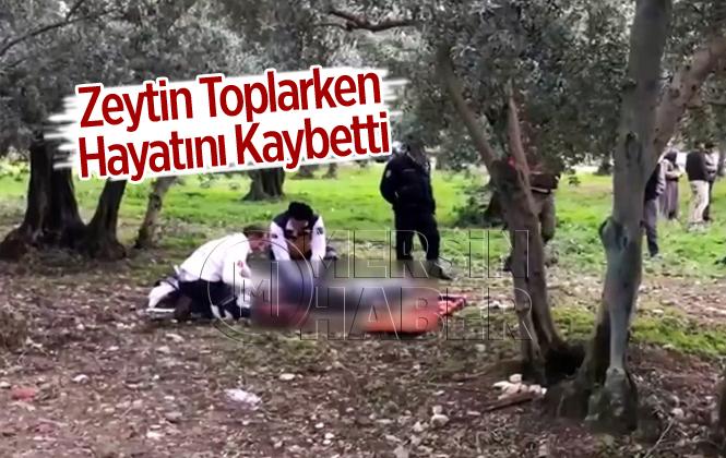 Zeytin Toplarken Kalp Krizi Geçiren Talat Gültekin Hayatını Kaybetti