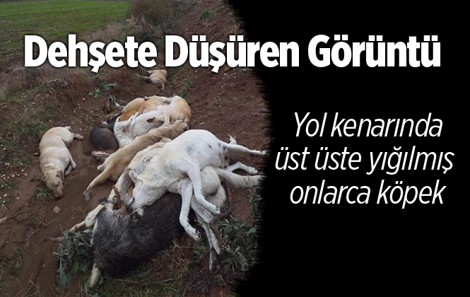Osmaniye'de Onlarca Köpek Ölüsü Bulundu