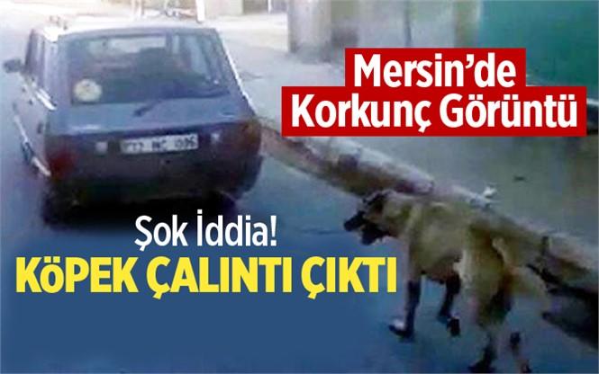 Mersin'de Aracın Arkasından Sürüklenen Köpek Çalıntı Çıktı İddiası