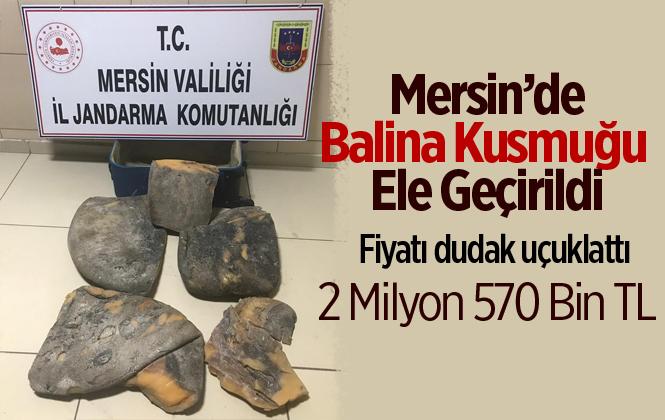 Mersin'de Balina Kusmuğu Ele Geçirildi