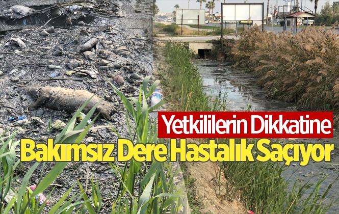 Mersin'de Bakımsız Dere Hastalık Saçıyor