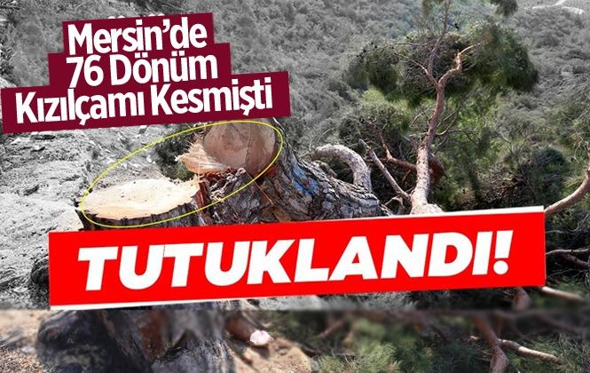 Mersin'de 72 Dönümlük Ormanlık Alanda Ağaçları Kesen Şahıs Tutuklandı