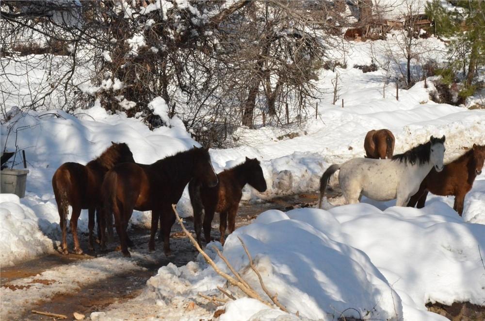 Büyükşehir, Yaban Hayvanları İçin Doğaya Yem Bıraktı