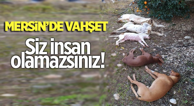 Mersin'de Zehir Verilen Köpekler Telef Oldu