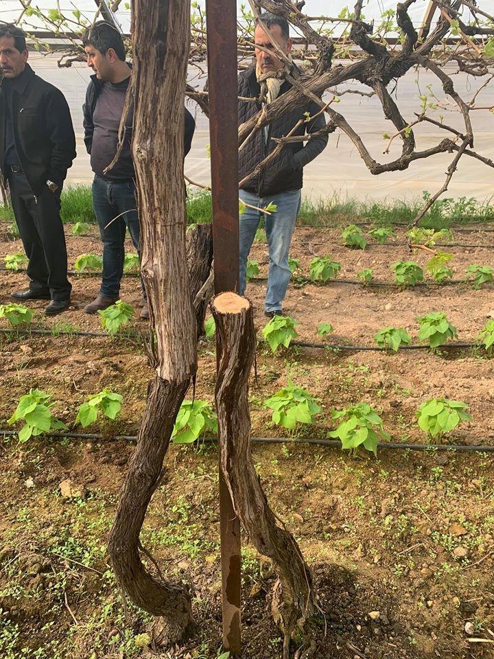 Mersin'de Ağaç Katliamına Karşı Çıkan Muhtarın Bahçesini Katlettiler