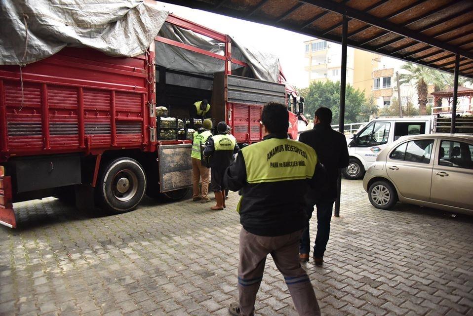 Anamur ve Bozyazı Belediyesinden Deprem Bölgesine Yardım