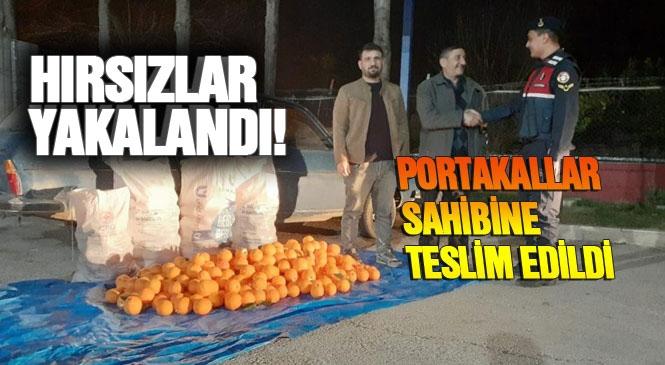 Mersin'in Merkez Akdeniz İlçesinde Bir Bahçeden Portakal Çalan 3 Zanlı Jandarma Ekiplerince Yakalandı