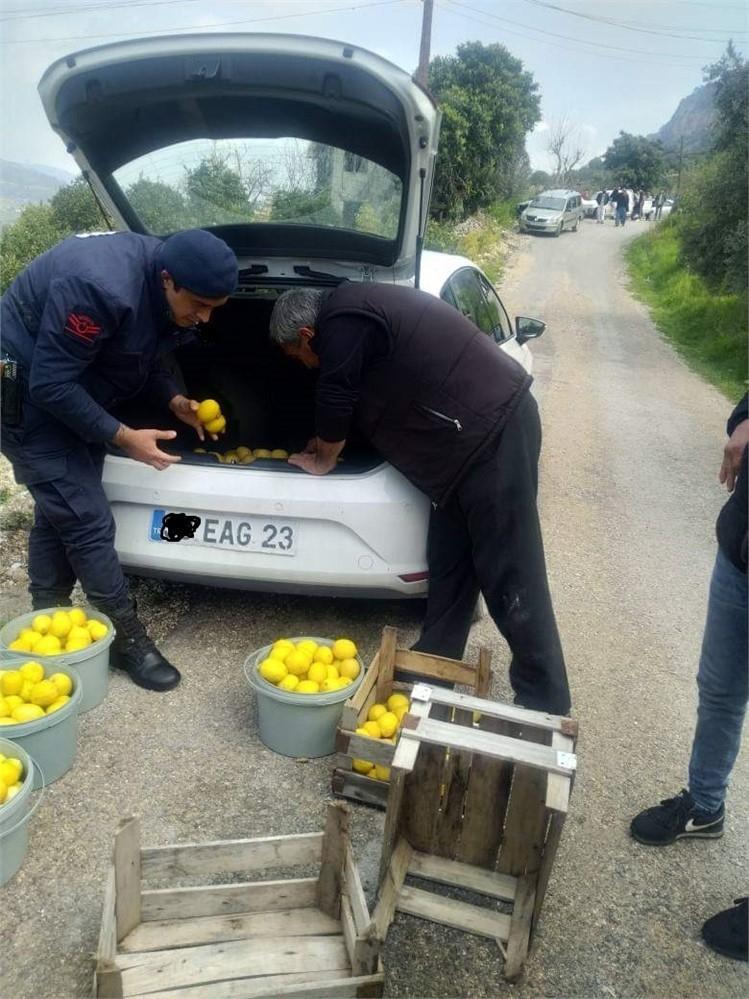 Fiyatı Artan Limon Hırsızların Gözdesi Oldu! Mersin Erdemli