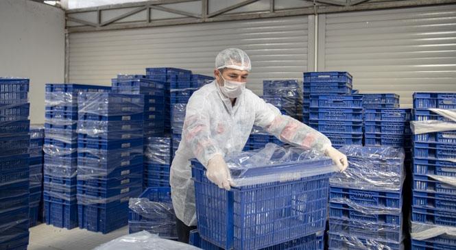 MER-EK, Ekmek Üretiminde Hem Hijyeni Sağlıyor Hem de Tedbirli Davranıyor