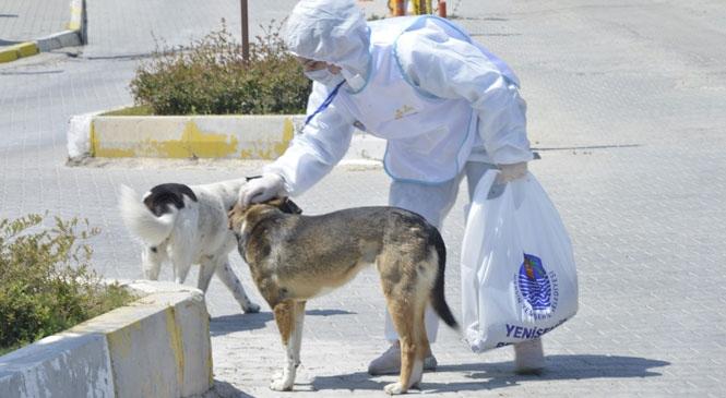 Yenişehir Belediyesi Korona Virüs Salgını Nedeniyle Yiyecek Bulmakta Zorlanan Sokak Hayvanlarına Kuru Mama ve Su Veriyor