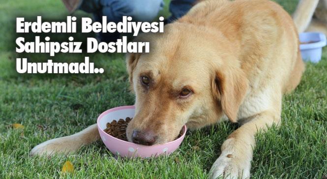 """Erdemli Belediyesi'nden Sokak Hayvanlara Mama Desteği! Tollu: """"Can Dostlarımız Bize Emanet"""""""