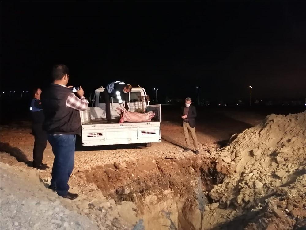 Mersin'de Kaçak Et Operasyonu! Yenişehir Belediyesi Zabıta E