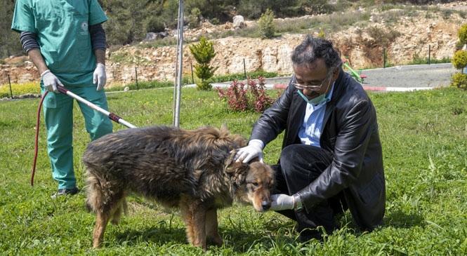 Seymen Köpeğin Tuzla Buz Olan Bacağı 40 Günlük Zorlu Tedaviyle Kurtarıldı