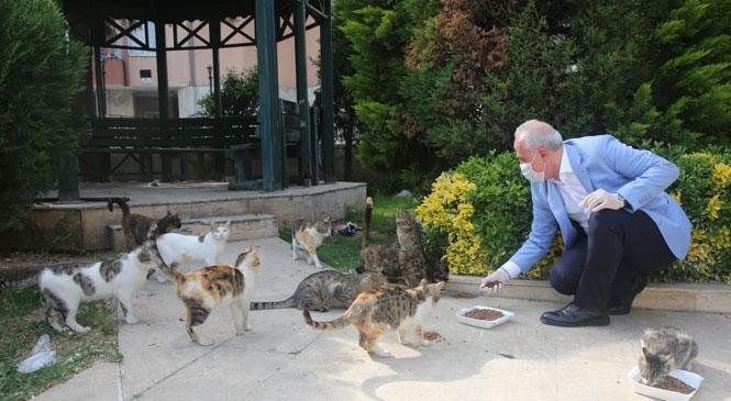 Akdeniz Belediyesi, Sokağa Çıkma Yasağından Etkilenen Sahipsiz Hayvanları da Unutmadı